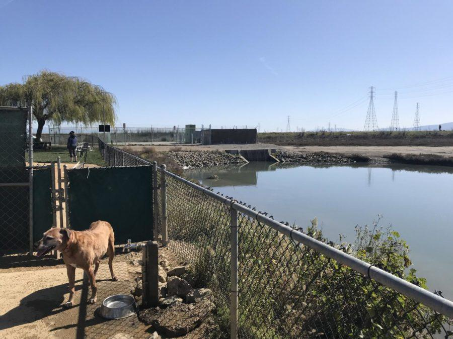Shore+Dogs+Park+is+located+right+next+to+part+of+the+marsh+in+Redwood+Shores.
