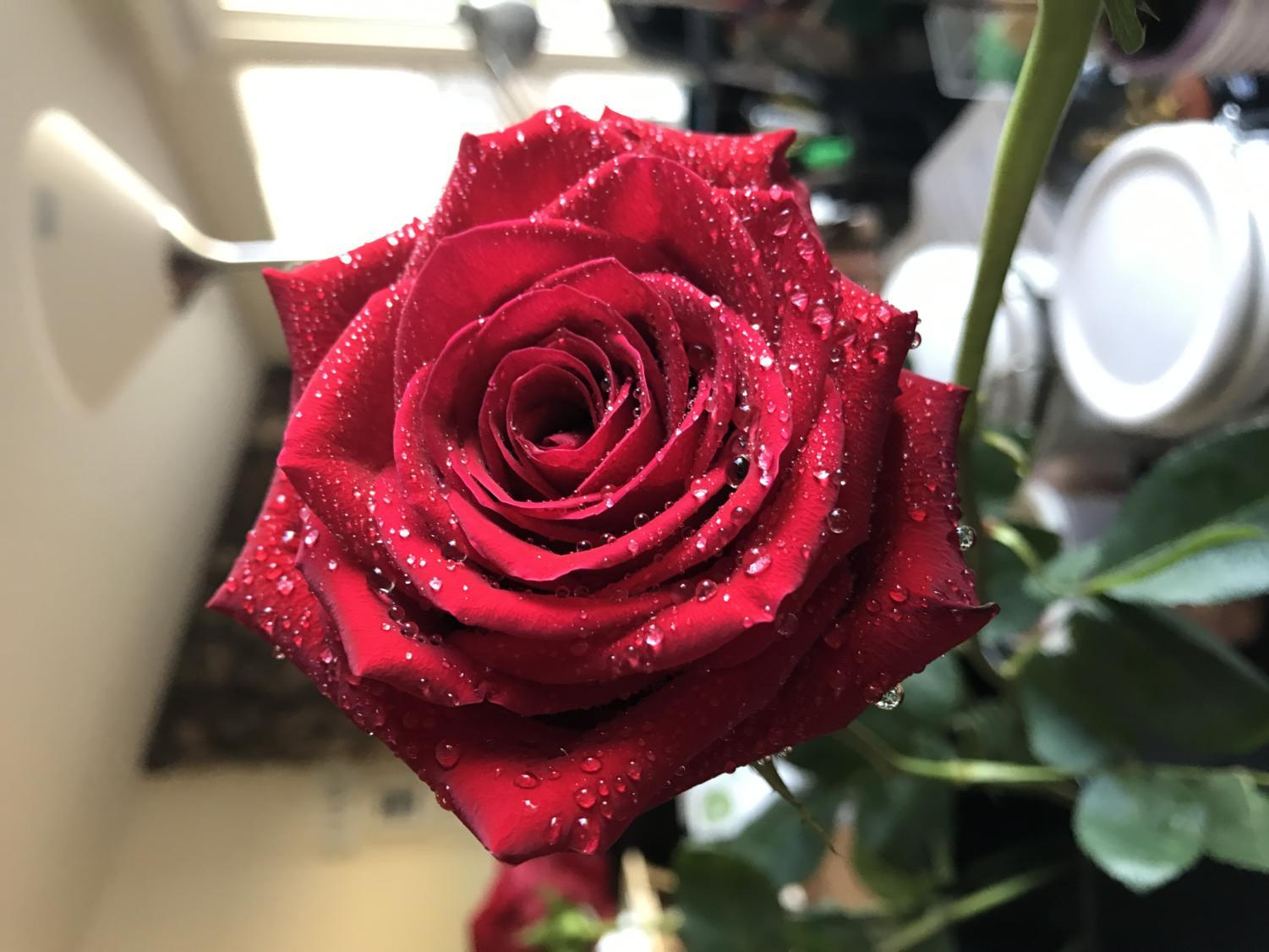 Roses are the classic red color and will be delivered to students during their third period class.