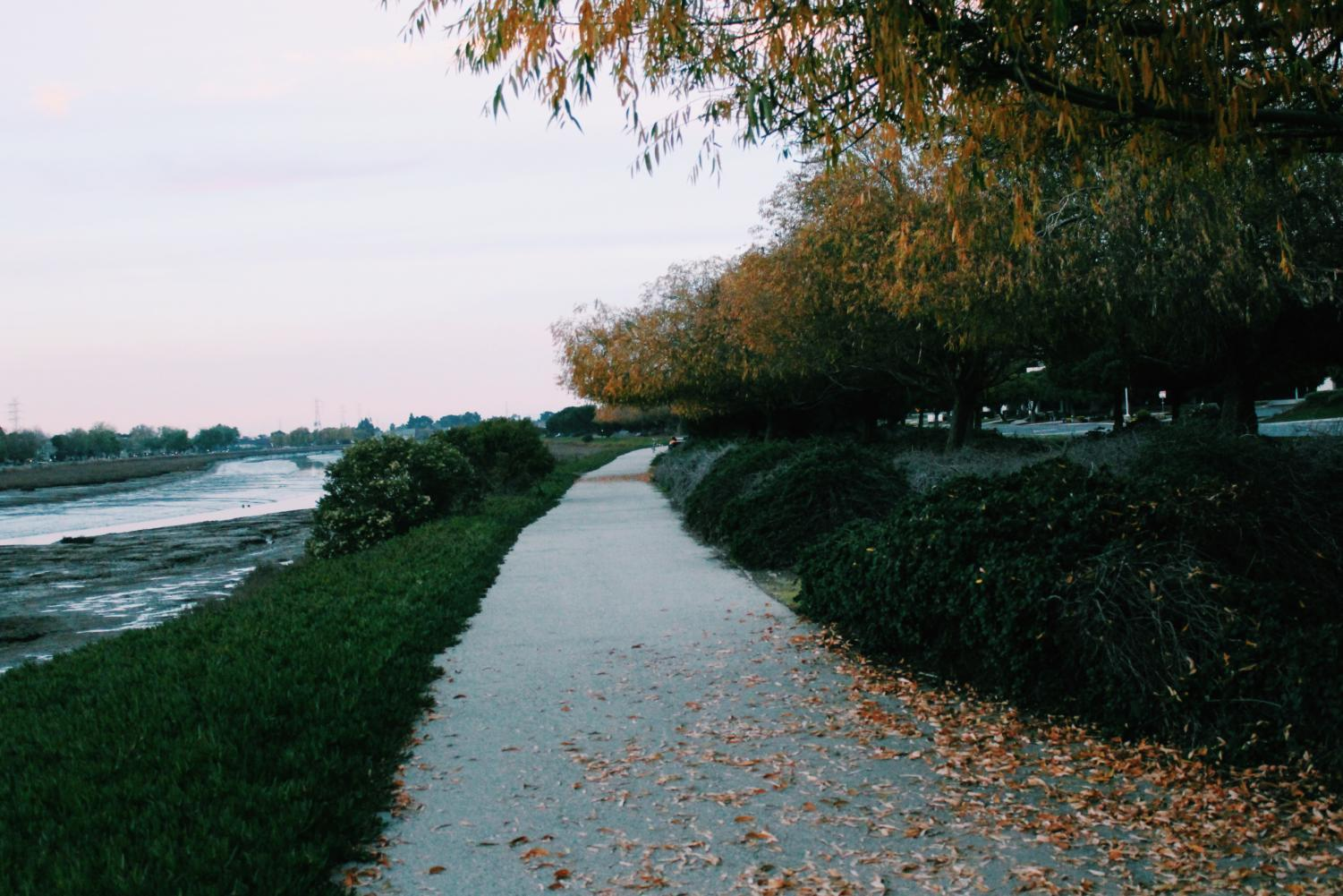 The bay trail is a great place to get outside. The trail runs alongside the San Francisco bay.