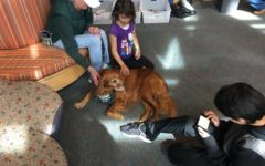 Golden retriever Marianna  listens to Rohan Sainani read her a chapter from his favorite book.