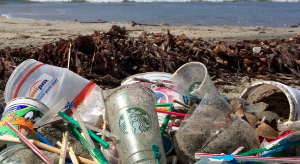 Plastic cups and straws found on the beach demonstrate the urgency for environmental reform.