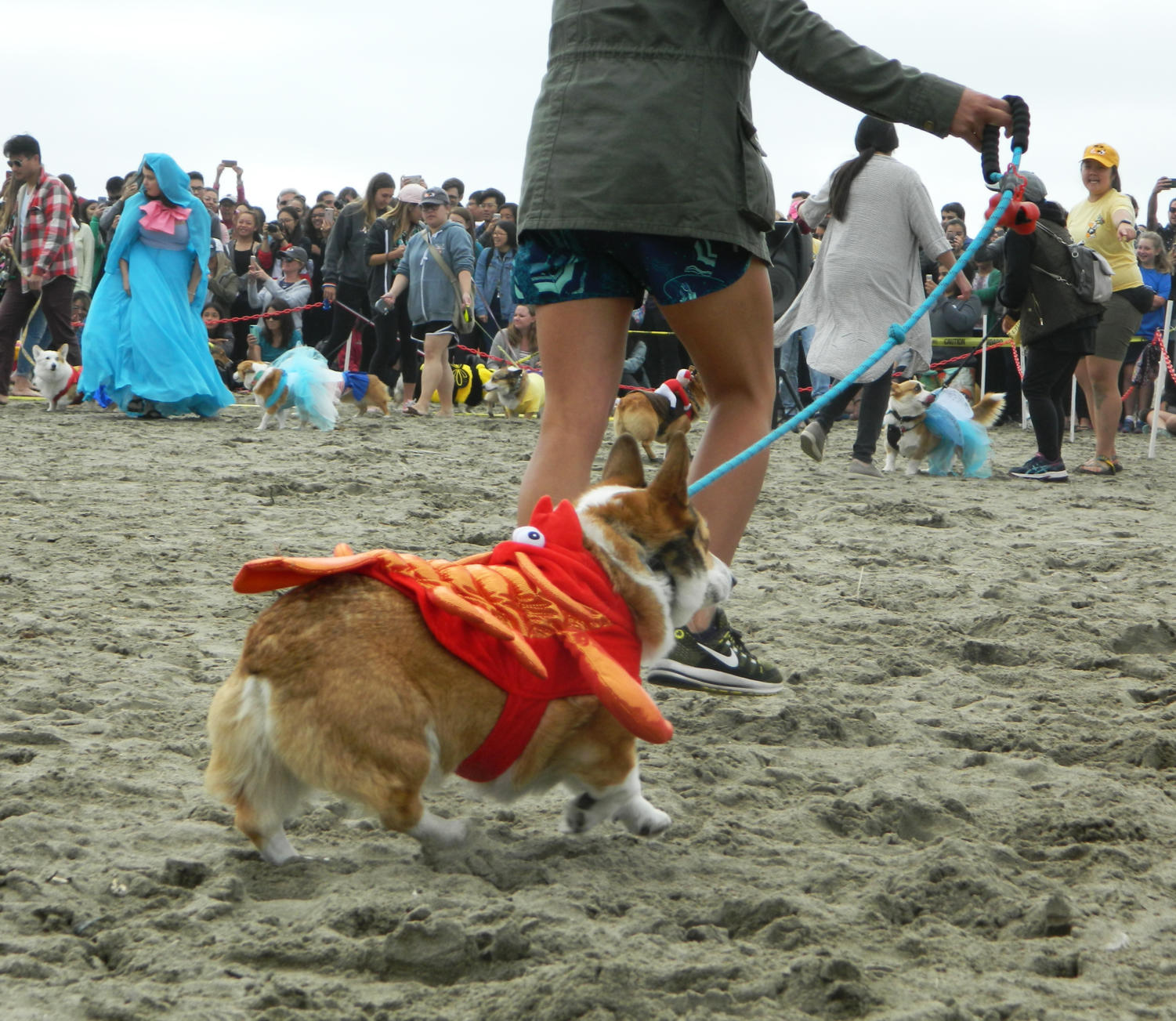 Pixel+the+corgi+parades+down+the+line+of+costumed+corgis+as+a+lobster.+While+there+were+not+many+corgi+crustaceans%2C+for+Pixel%27s+owner+Gracy+McGuigan%2C+it+was+the+perfect+choice.+%22It+was+a+costume+he+%5BPixel%5D+got+two+years+ago+and+because+we%27re+by+the+ocean%2C+we+thought+it+was+fitting%2C%22+McGuigan+said.
