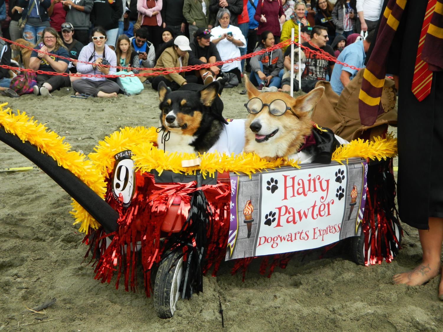 Two+corgis+dressed+up+as+characters+from+Harry+Potter%2C+or+%22Hairy+Pawter%22+await+judging+at+the+costume+contest.+The+duo+will+later+claim+the+second+place+title.