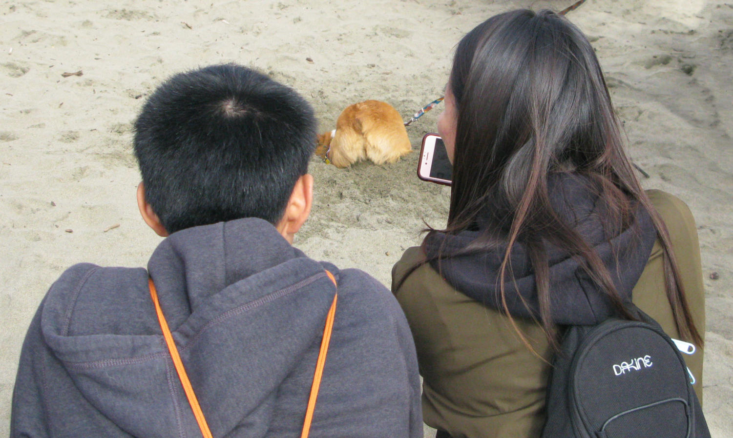 A+couple+takes+a+photo+of+a+corgi+as+it+digs+a+hole+in+the+sand.