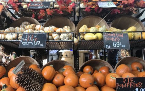 Trader Joe's welcomes the Halloween season with affordable pumpkins