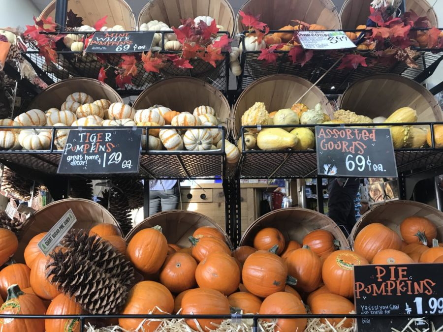 With a variety of pumpkins, shoppers have the opportunity to choose from different shapes, colors, and sizes.