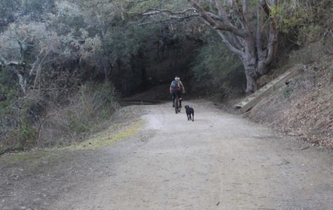 Chris Ketner bikes as his dog, a black lab named Noodle, walks alongside him. Ketner often takes Noodle to walk in public areas like Waterdog Lake and wishes there were more areas open to the public for dog-walking.