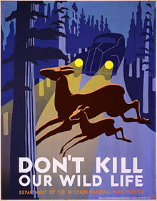 Early 20th century poster from the United States Park Service concerning wildlife-vehicle collisions.