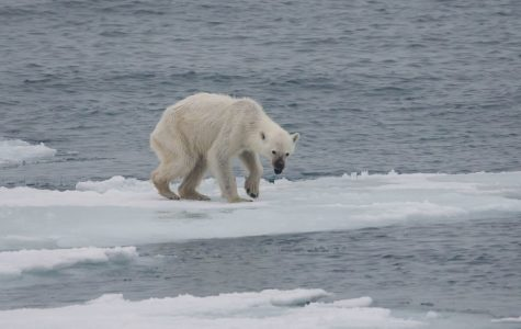 Global warming is making the polar ice caps melt, which hurts polar bears and other arctic creatures.