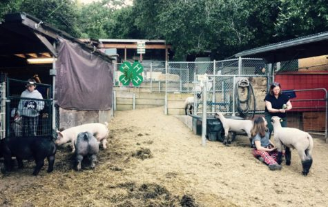 4-H members Roen Theuner and Peyton Steiz care for their animals at the San Carlos/Eaton Hills 4-H farm.
