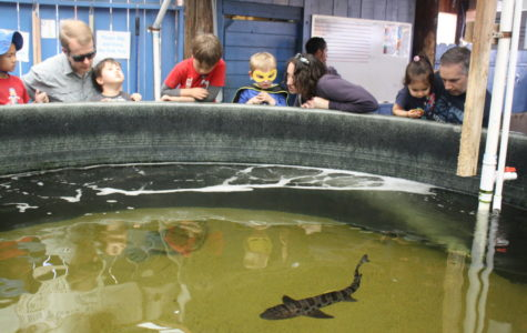 Families crowd around the leopard shark exhibit to watch these animals circle the tank.