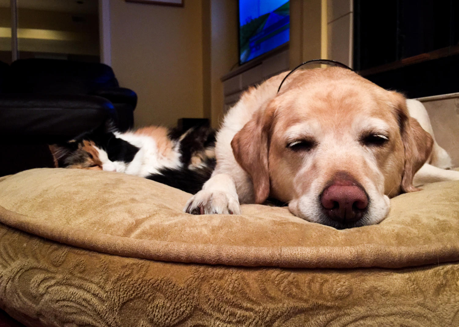 Living with a cat and dog adds a sense of balance to new families.