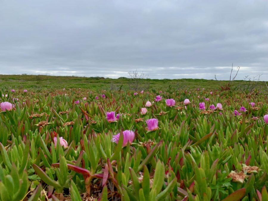 Wavecrest Open Space Reserve offers one of the most beautiful sights in Half Moon Bay.
