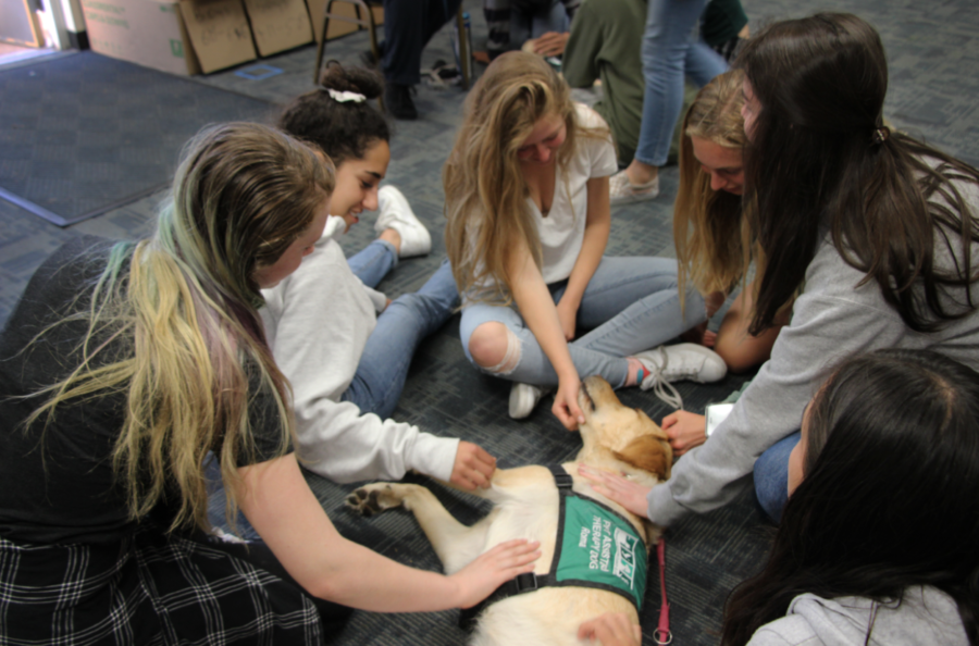 Emma Evans, a sophomore, and juniors, Dina Bakour and Alexa Jamison, sit in a circle with other students and pet one of the therapy dogs.