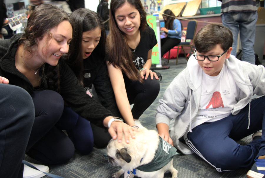 Students gather around Wilbur, one of the therapy dogs, to take a break from the stress of schoolwork.