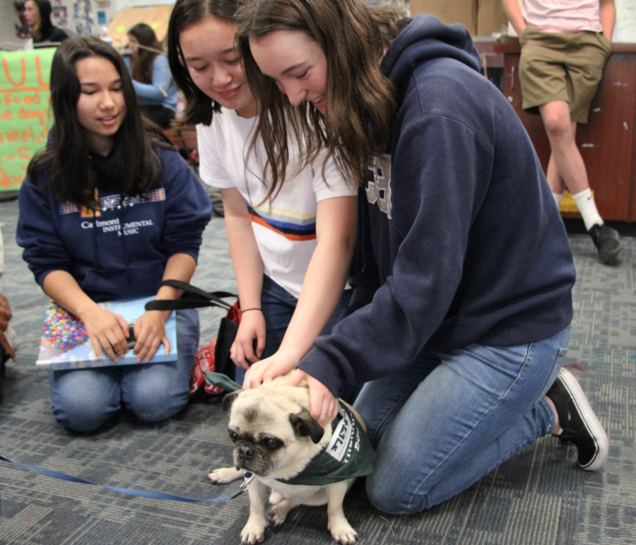 Students adore Wilbur and look to him with affection.