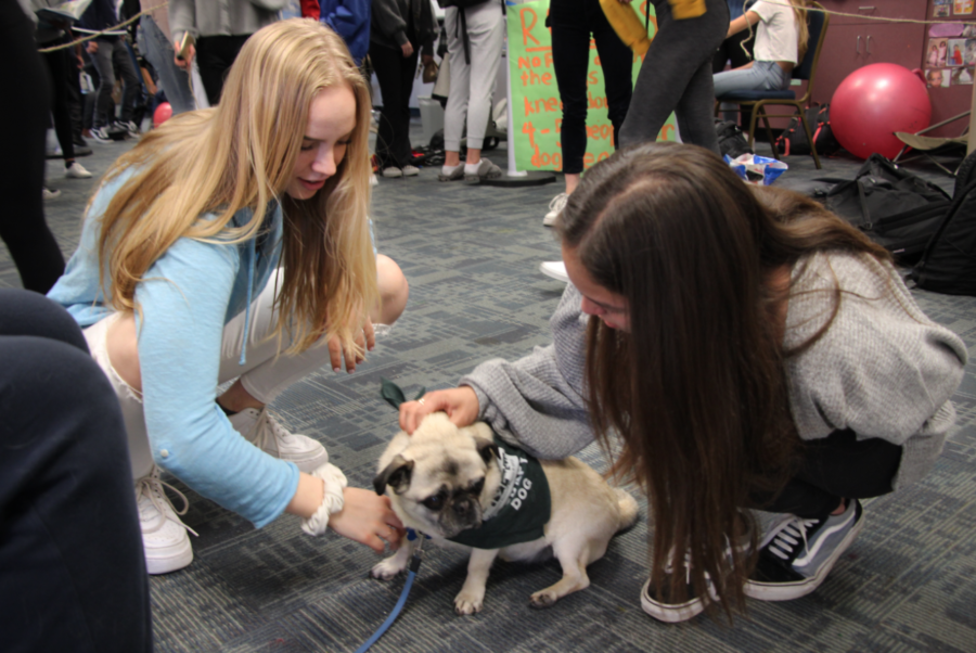 Sophomores Nika Lobykina and Brianna Butler try to de-stress by petting Wilbur.