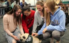 Sophomores Nicole Doud, Emily Kim, Samantha Turtle, and Sabrina Jackson gather around Wilbur the therapy dog.