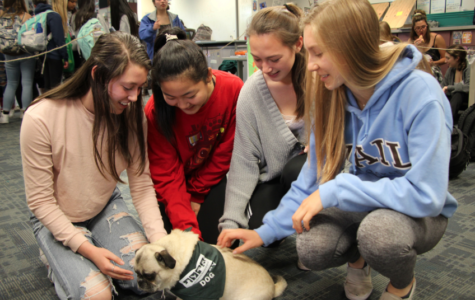 Therapy dogs help students de-stress before finals
