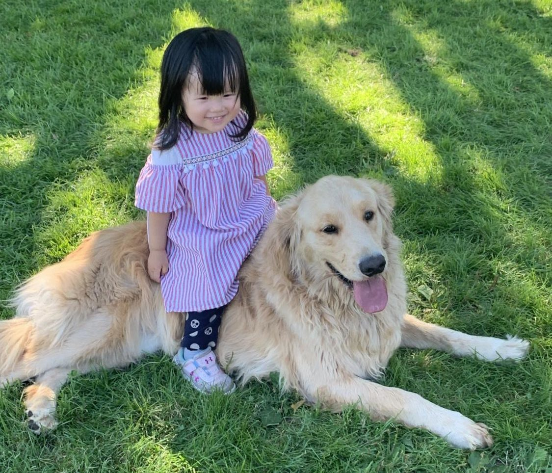 Young children are invited to play with the dogs at Bark in the Park.