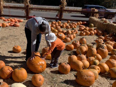 Webb Ranch Pumpkin Patch kicks off the Halloween season