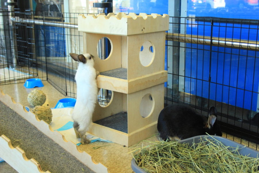 A bunny moves around in the play area.