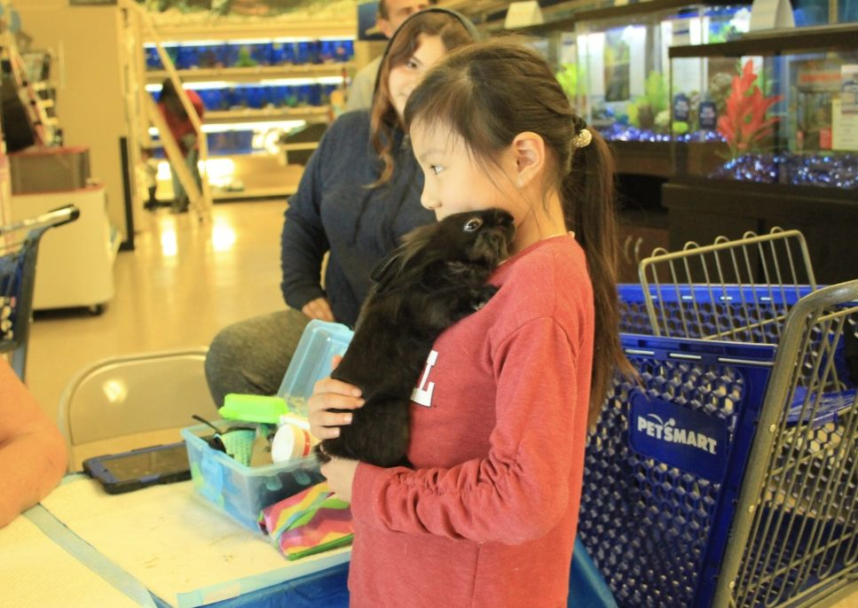 A little girl pets a bunny from the South Bay Rabbit Rescue.