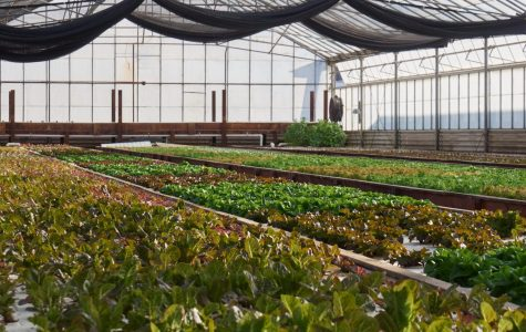 Ouroboros Farms, the aquaponics farm located in Half Moon Bay, California. Fish tanks circulate 9,000 gallons of water out through neighboring