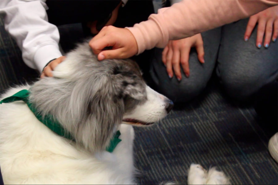 Therapy dogs and bunnies bring dif-fur-ent relaxation methods before dead week