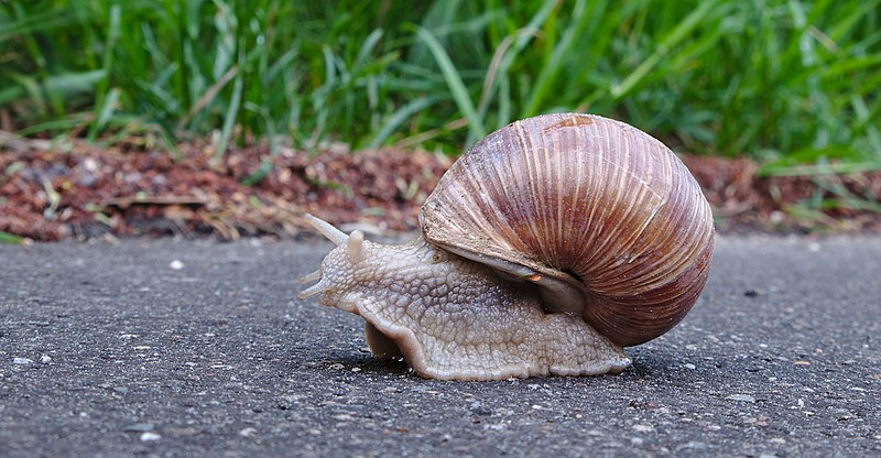 Students need to take a page out of this snail's book and slow down before finals.