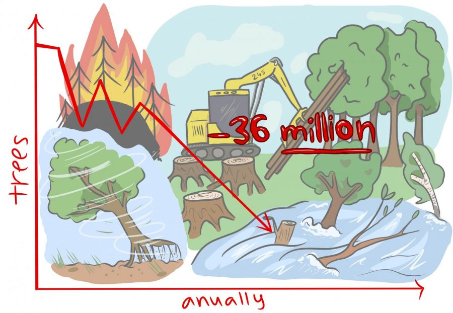 Cartoon: 36 Million Trees