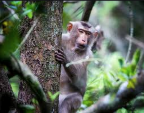 A Chinese Biotech company created a vaccine that protected rhesus macaque monkeys from COVID-19.