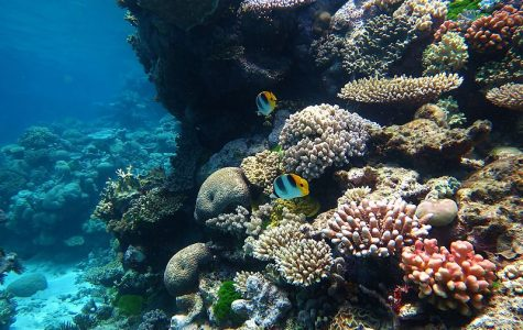 The Great Barrier Reef is the largest coral reef in the world, and has slowly been dying over the past few years due to coral bleaching.
