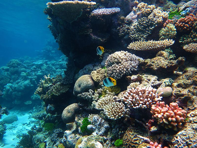 The+Great+Barrier+Reef+is+the+largest+coral+reef+in+the+world%2C+and+has+slowly+been+dying+over+the+past+few+years+due+to+coral+bleaching.