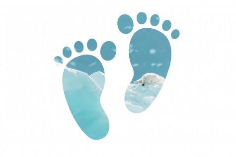 Our Footprint Ep. 4: International Bird Rescue