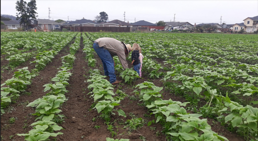 Frank Andreotti and his kids inspect their crops at the Half Moon Bay farm.