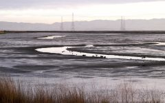 Baylands Morning/ Ingrid Taylar/ Wikimedia Commons/ CC BY 2.0