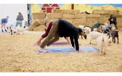 Lemos Farm's goat yoga relaxes community