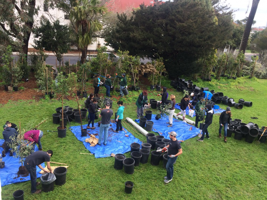 Volunteers+a+part+the+Friends+of+the+Urban+Forest+work+together+to+plant+trees+for+San+Francisco+communities.