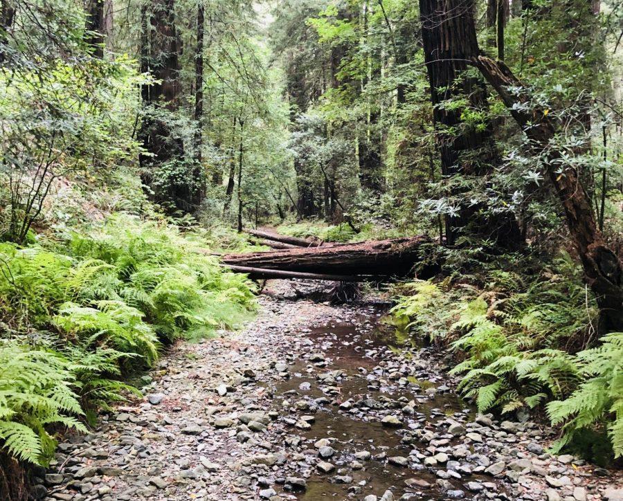 A bridge across Fern Creek trail offers views of the redwood trees in Muir Woods.