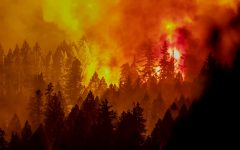 """Photo / Los Angeles Daily News / """"The Caldor fire burns on a ridge south of Riverton, Calif."""" / Fiona Kelliher / Creative Commons / CCo 1.0"""