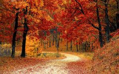 Poll: What is the best part of fall?