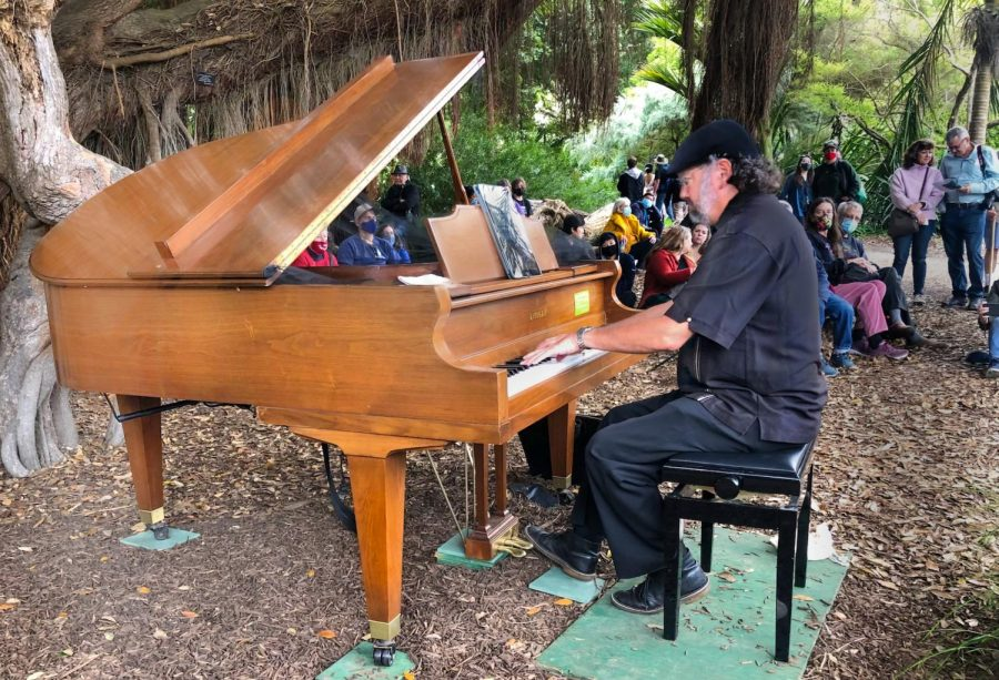 Kymry Esainko performs under the pohutukawa tree while Flower Piano attendees watch.