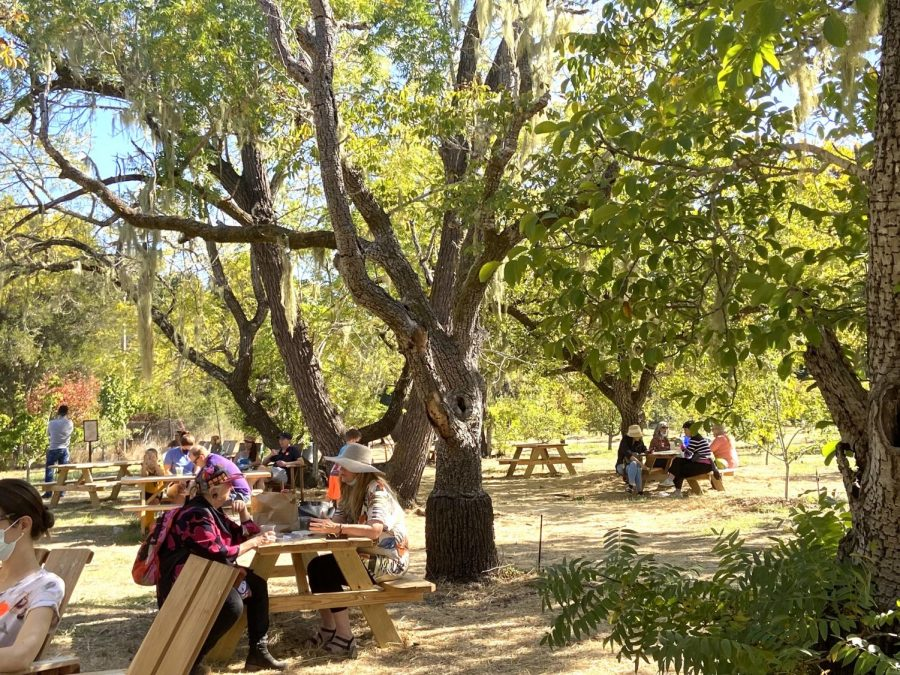 Guests admire the mesmerizing orchard, while drinking freshly made cider.